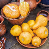 Decorative pumpkins in clay bowl Royalty Free Stock Photo