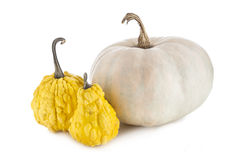 Decorative pumpkins collection Royalty Free Stock Photography