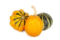Decorative pumpkins collection isolated on white background. Decorative pumpkins collection isolated on a white background Royalty Free Stock Photography