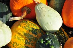Decorative pumpkins Royalty Free Stock Photography