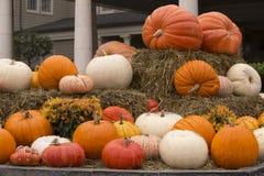 Decorative Pumpkins on display Stock Image