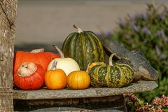 Decorative pumpkins on display in the garden Stock Image