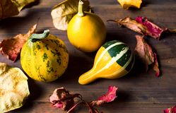 Decorative pumpkins and dry autumn leafs Royalty Free Stock Image