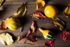 Decorative pumpkins and dry autumn leafs Stock Images