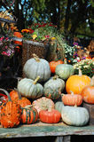 Decorative pumpkins and flowers. On display Royalty Free Stock Photos