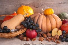 Decorative pumpkins and fruits Stock Photos