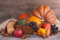 Decorative pumpkins Royalty Free Stock Photo