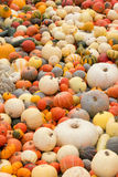 Decorative pumpkins gathered at one place Royalty Free Stock Photos
