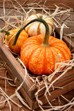 Decorative Pumpkins and Gourds Royalty Free Stock Images