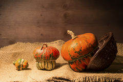 Decorative pumpkins. A group of colorful decorative pumpkins on gunny background Royalty Free Stock Images