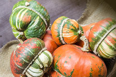 Decorative pumpkins. A group of colorful decorative pumpkins on gunny background Royalty Free Stock Photos