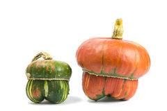 Decorative pumpkins. A group of colorful decorative pumpkins on white background Stock Image