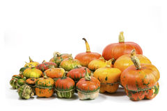Decorative pumpkins. A group of colorful decorative pumpkins on white background Royalty Free Stock Photos