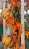 Decorative pumpkins Stock Images