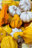Decorative pumpkins Royalty Free Stock Images