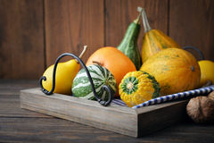 Decorative pumpkins Stock Image