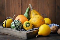 Decorative pumpkins Stock Image