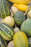 Decorative Pumpkins. Or ornamental varieties, are grown for their appearance and not for their edible qualities Stock Photos