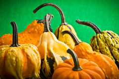 Decorative pumpkins squash fruits Royalty Free Stock Photography