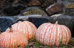 Decorative pumpkins and stone wall Royalty Free Stock Photos