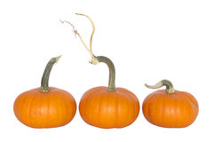 Decorative pumpkins. Royalty Free Stock Photography