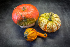 Decorative pumpkins. Three pumpkins decorative view from the top Royalty Free Stock Image