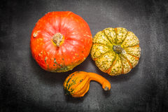 Decorative pumpkins. Three pumpkins decorative view from the top Royalty Free Stock Photography