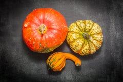 Decorative pumpkins Royalty Free Stock Photography