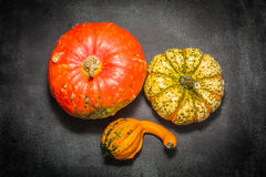 Decorative pumpkins. Three pumpkins decorative view from the top Stock Image