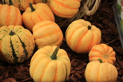 Decorative pumpkins Royalty Free Stock Image