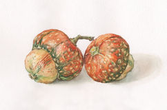 Decorative pumpkins watercolor painting. The hand painted watercolor of two decorative pumpkins Stock Images