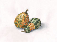 Decorative pumpkins watercolor painting Royalty Free Stock Photos