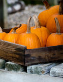 Decorative pumpkins in a wood box Stock Image