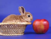 Decorative rabbit Royalty Free Stock Photo