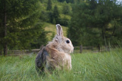 The decorative rabbit Stock Photos