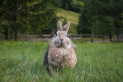 The decorative rabbit Stock Photography