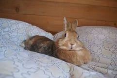 The decorative rabbit Royalty Free Stock Photo