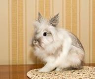 Decorative Rabbit Royalty Free Stock Photography