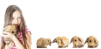 Decorative rabbit Stock Photo