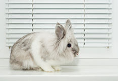 Decorative Rabbit Royalty Free Stock Images
