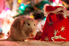 Decorative rat on a background of Christmas decorations Stock Photo