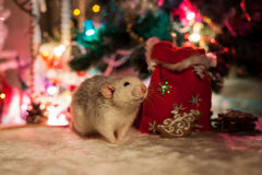 Decorative rat on a background of Christmas decorations Stock Images
