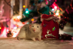 Decorative rat on a background of Christmas decorations Royalty Free Stock Image