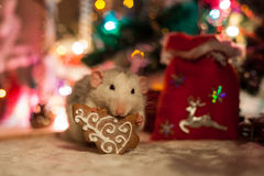Decorative rat on a background of Christmas decorations Stock Image