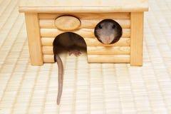 Decorative rat Stock Images