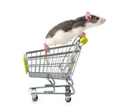 Decorative rat sitting in a miniature shopping trolley. royalty free stock photos