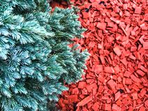 Decorative red chips bark of trees. Studio Photo Royalty Free Stock Photo