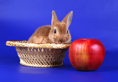 Decorative red cub of a rabbit i Stock Image