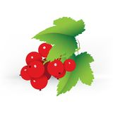 Decorative red currant Royalty Free Stock Images