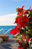 Decorative red flowers and blue sea at Piran harbor, Istria Stock Photo